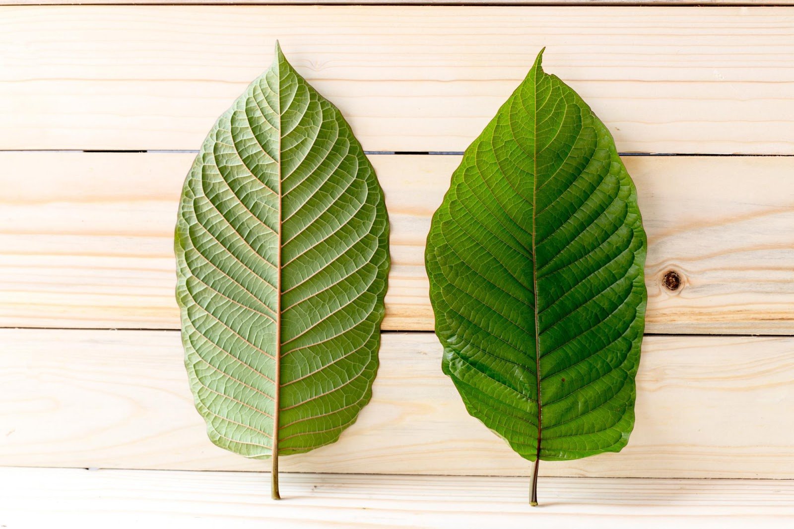 The World's Worst Recommendation About Kratom Extract